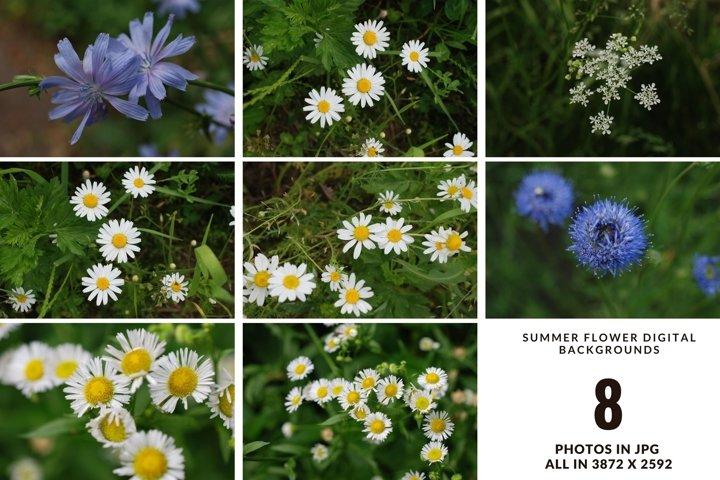 Summer wildflower digital photo set, digital photo