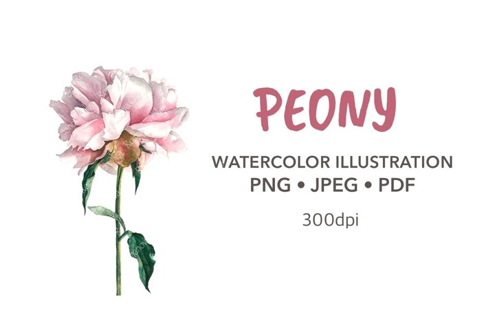 Peony Watercolor clipart Sublimation design