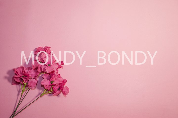 Festive background. Pink flowers on a pink background. Monoc
