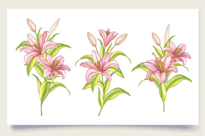 42 Hand drawn beautiful colour of lily flowers