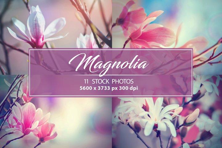 Set photos of spring flowering Magnolia.