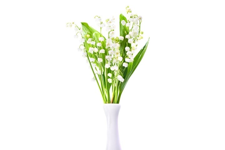 White flowers lilies of the valley in white vase