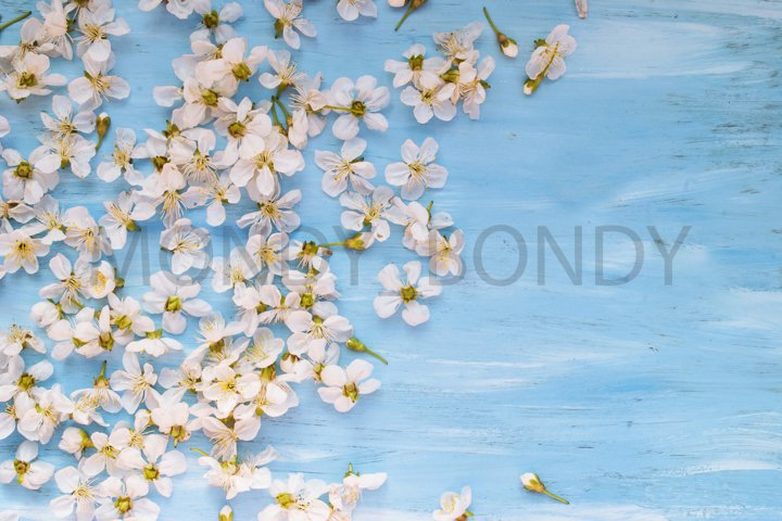 White spring flowers on a blue shabby blackboard. Place for