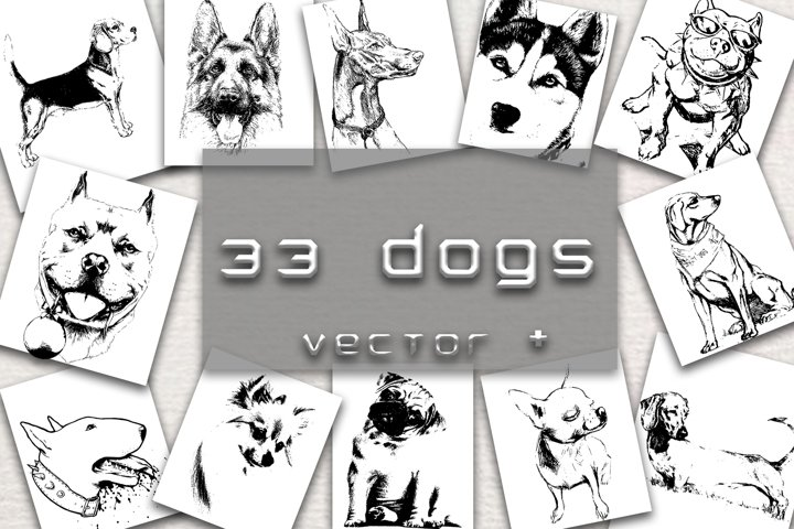 33 DOGS hand drawn illustrations
