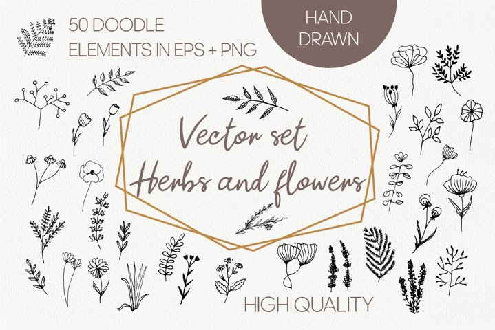 Vector organic herb and wildflower PNG. Hand drawn doodle