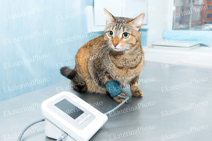 A set of photos. Cat in a veterinary clinic