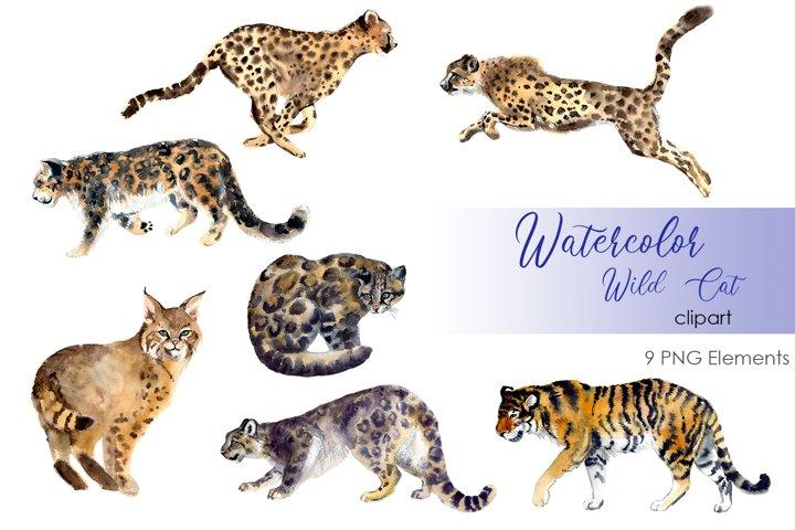 Watercolor Clipart. Wild cats art. Cat clipart
