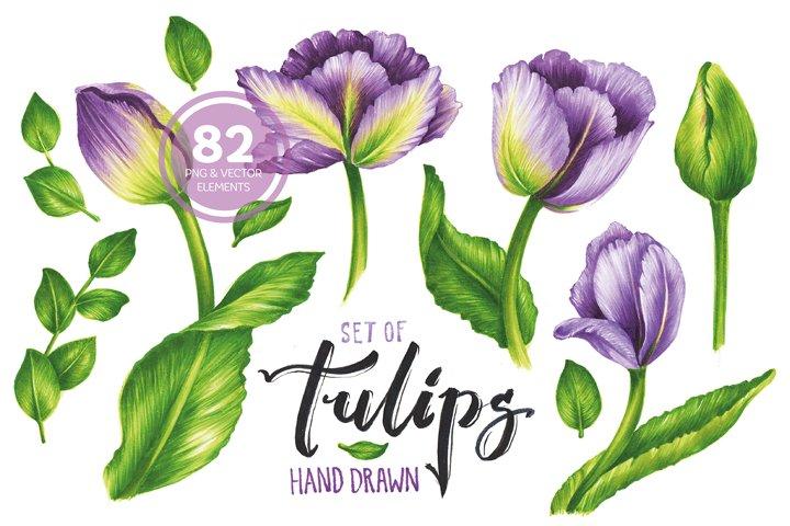 Vector Set Of Violet Tulips