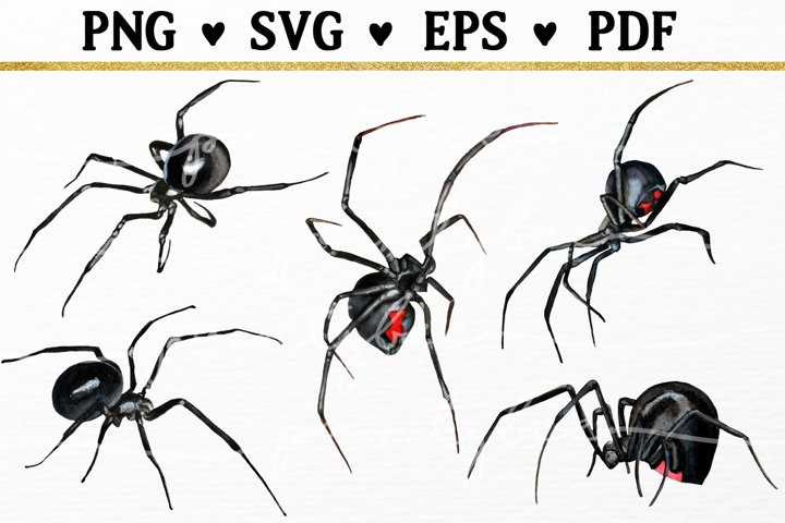 5 Black Widow Spider SVG, Spooky Halloween Insect Clipart