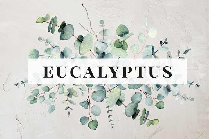 Eucalyptus. Watercolor collection, greens clipart with leaf