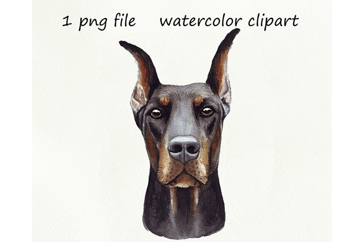 Watercolor dog png, Dobermann, hand drawn