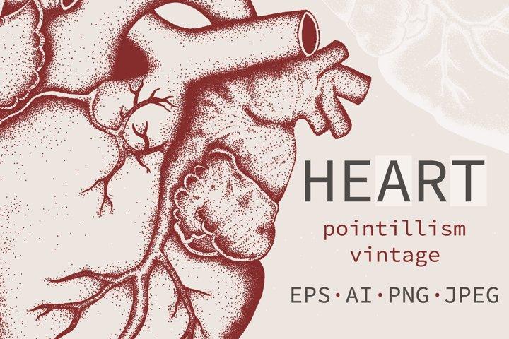 HEART Anatomy Vector