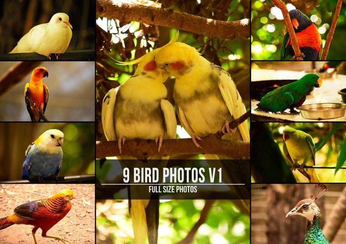 9 Beautiful Birds example