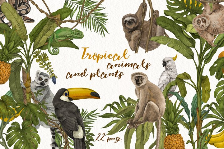 Tropical jungle animals, plants set