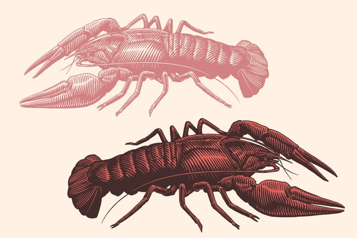 Crayfish. Hand drawn illustration. Vector engraving.