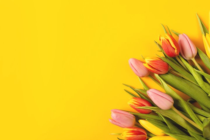 Banner with a bouquet of tulips on an yellow background.