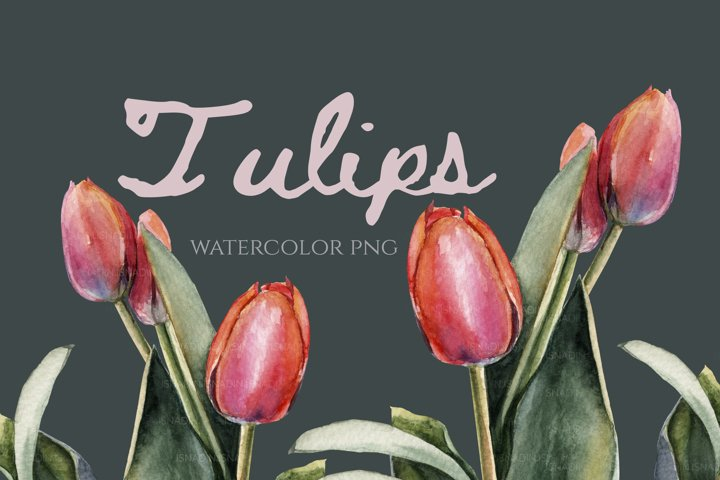 PNG watercolor tulips painting Clip Art and Print for spring