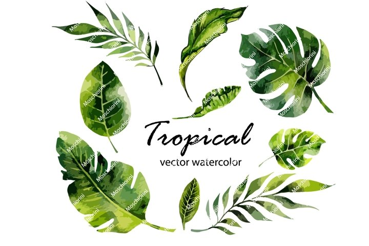 Set Eps of illustrations of the tropical watercolor leaves