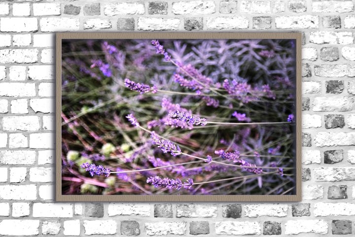 Nature photo, lavender print, spring flowers, floral
