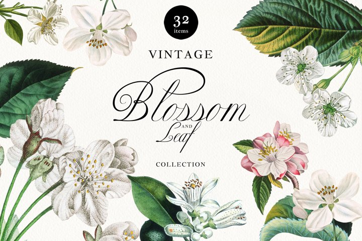 Vintage Fruit Tree Blossom and Greenery PNG Collection
