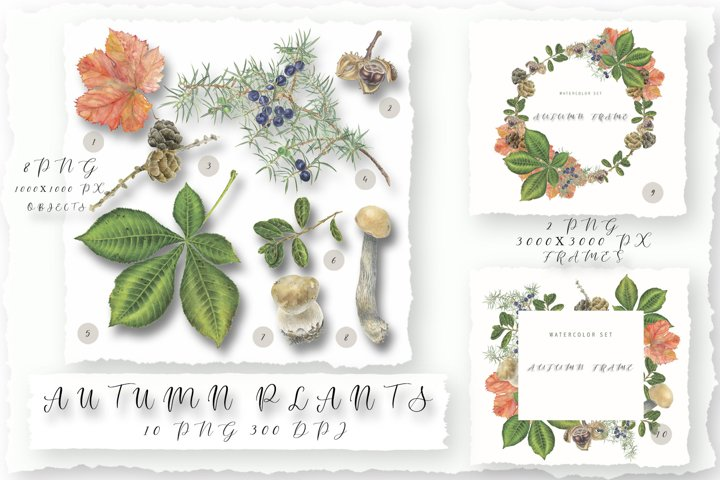Autumn plants. Watercolor collection of clipart and frames.