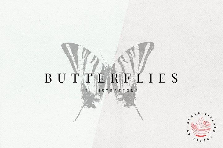 Premium Butterflies Illustrations