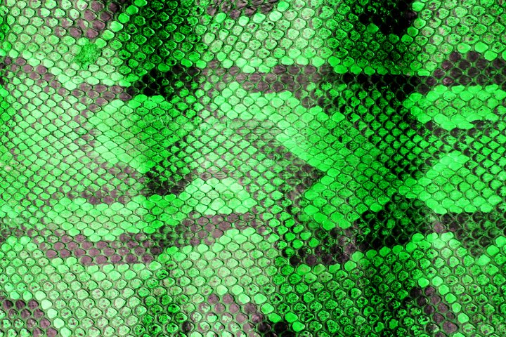 Close Up of Abstract Green Real Snake Skin Snake Print