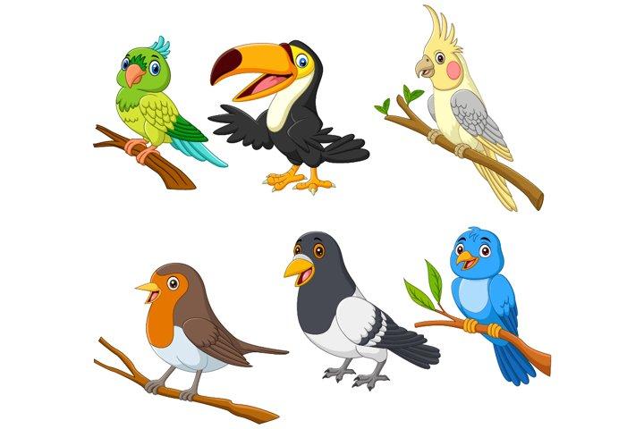 Set of Six Exotic Tropical Birds Cartoon