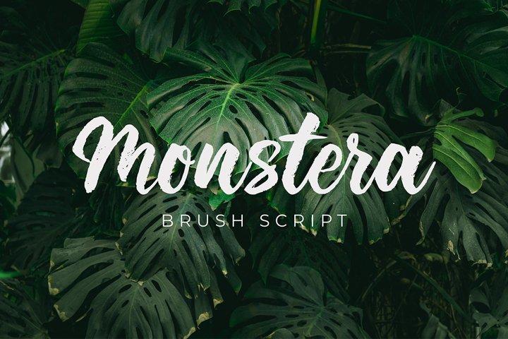 Monstera Brush Script