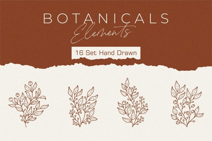 Botanicals Elements . 16 set hand-drawn