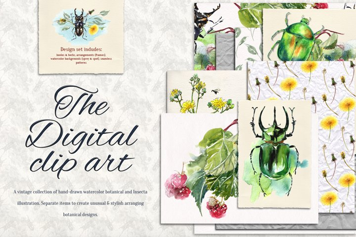 Beetles and Grass watercolor collection