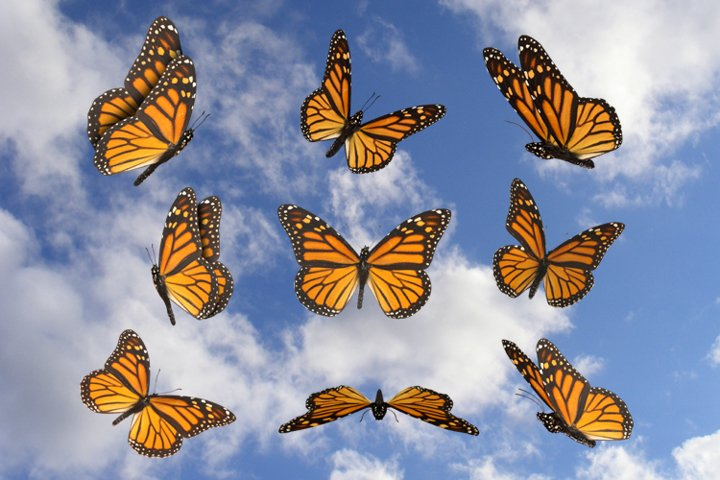Monarch Butterflies, 9 Transparent PNG Butterfly Fairy Tale