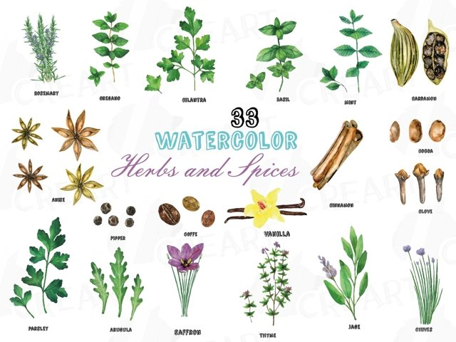 Herbs and Spices clip art pack, Watercolor herbs and spices chart, kitchen herbs, food print. PNG, jpg, svg, vector illustrator &corel files