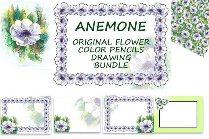 Anemone. Flower color pencils set