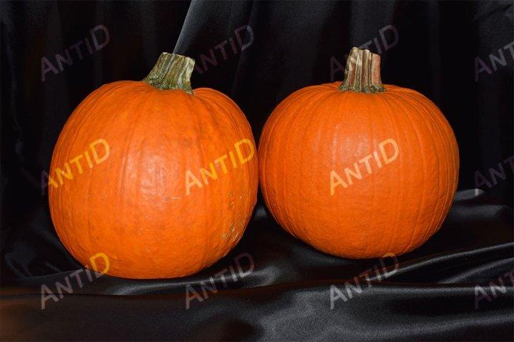 Ripe pumpkins on a black background