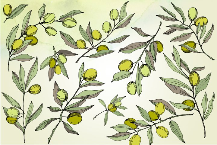 Olives vector EPS watercolor set   example 2