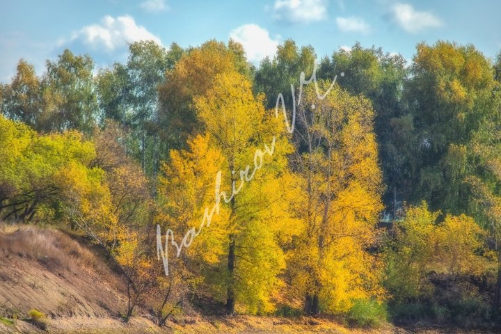 Autumn trees on the riverside