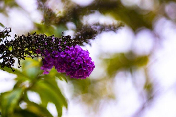 Purple flowers in a park