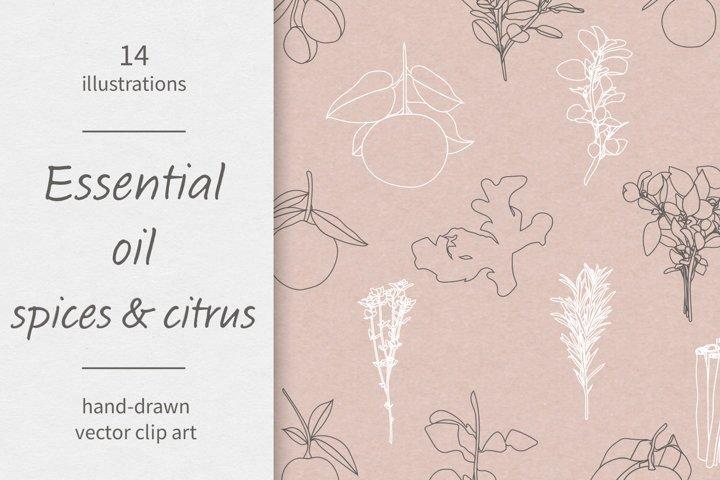 Essential oils / Spices / Citrus / Vector / Clip art