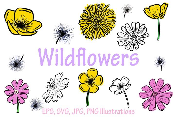 Beautiful Wildflower Illustration Collection