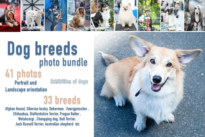 Dog breeds Photo Bundle 41 jpg