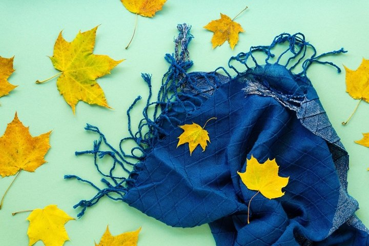 Autumn flat lay of maple leaves and blue scarf