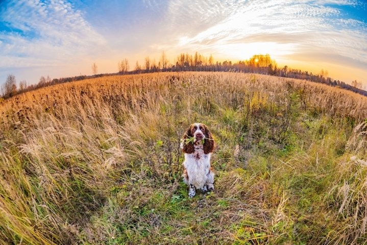 Beautiful dog holds a bouquet of flowers on fall field.