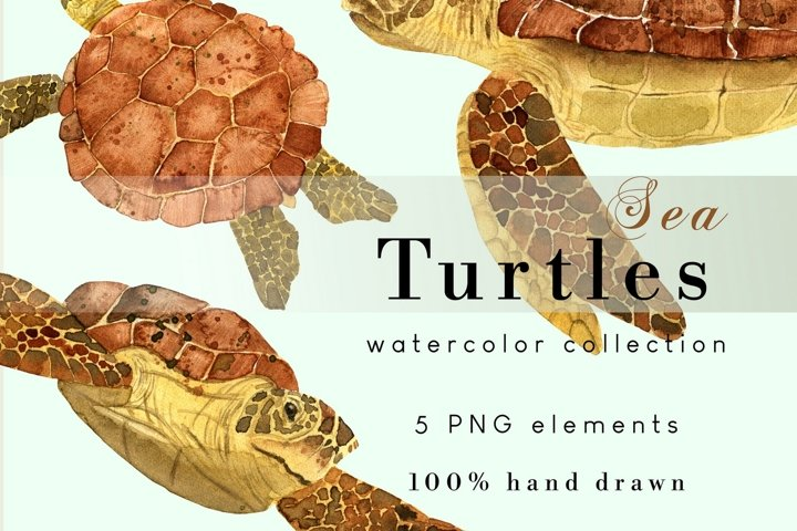 Sea Turtle PNG Clipart | Watercolor Under the Sea Clip Art