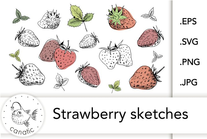 Strawberry sketches. EPS/SVG/PNG/JPG