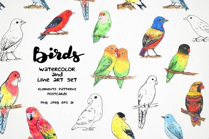 Birds clipart - watercolor & vector line art set