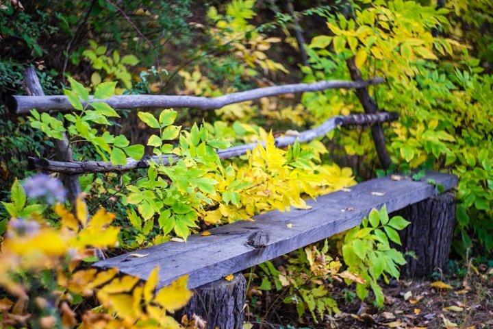 Autumnal park bench