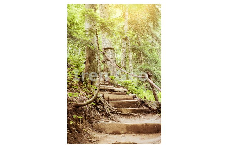 Stairs going up hillside in forest toward sunrise