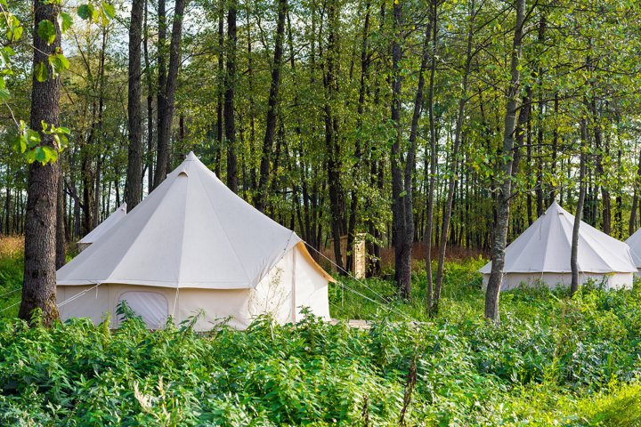 Two canvas bell tents outdoors in camping in the forest