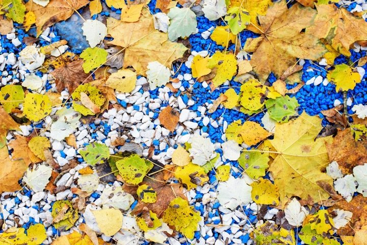 Natural texture of autumn fallen leaves on blue stones